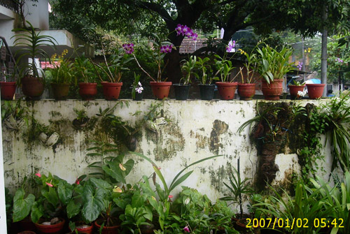 Garden in Homestay - Homestay Building - Kerala Homestay, Kerala Homestays, Homestays Kerala, Homestays in Kerala, Kerala Hotels, Resorts, Houseboats, Kerala Vacation, Homestay Kerala, Homestay Cochin, Homestay Kochi, Riverside Homestay, Hertiage Homestays, Kerala Offers, Kerala Packages, Kerala Homestay, Kerala Resorts, Kerala Spa Resorts, Cruise Packages, House Boat Packages, Beach Resort Kerala, Munnar Packageskerala homestay, cochin homestay, resorts kerala, homestay munnar,homestay kovalam, homestay thekkady, homestay  thiruvananthapuram, homestay wayanad, homestay poovar, homestay malappuram, homestay thrissur, homestay periyar, homestay varkala, homestay  kozhikode, calicut homestay, homestay vagamon, homestay kollam quilon, homestay malampuzha, homestay kottayam, homestay Cochin, wild life  resort, holiday resort ,holidays, homestay, Beaches, Economy Homestay Kerala, Heritage Resorts, heritage Homestay, Star Homes, House For Rent, Homestay In Kerala, Holiday Packages Kerala