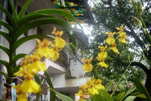 Flowers - Homestay Building - Kerala Homestay, Kerala Homestays, Homestays Kerala, Homestays in Kerala, Kerala Hotels, Resorts, Houseboats, Kerala Vacation, Homestay Kerala, Homestay Cochin, Homestay Kochi, Riverside Homestay, Hertiage Homestays, Kerala Offers, Kerala Packages, Kerala Homestay, Kerala Resorts, Kerala Spa Resorts, Cruise Packages, House Boat Packages, Beach Resort Kerala, Munnar Packageskerala homestay, cochin homestay, resorts kerala, homestay munnar,homestay kovalam, homestay thekkady, homestay  thiruvananthapuram, homestay wayanad, homestay poovar, homestay malappuram, homestay thrissur, homestay periyar, homestay varkala, homestay  kozhikode, calicut homestay, homestay vagamon, homestay kollam quilon, homestay malampuzha, homestay kottayam, homestay Cochin, wild life  resort, holiday resort ,holidays, homestay, Beaches, Economy Homestay Kerala, Heritage Resorts, heritage Homestay, Star Homes, House For Rent, Homestay In Kerala, Holiday Packages Kerala